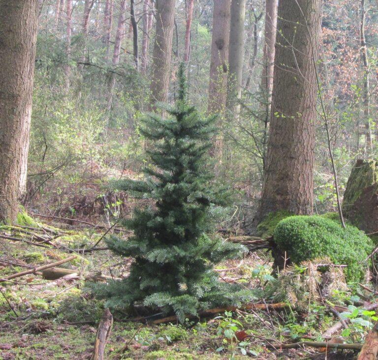 Basic Tree Golden Mocca 180cm-1845